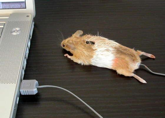 Ratón Ratón